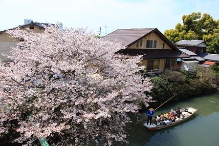 【博多発3/28】柳川さげもんめぐりと桜まつり&水郷川下り 話題の果樹園で癒しのひとさら♡
